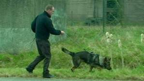 Drug predators vs police-tracking-dogs