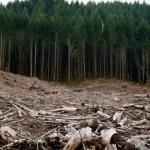 Comisia Europeană a activat procedura de infringement pentru România din cauza tăierilor ilegale de păduri