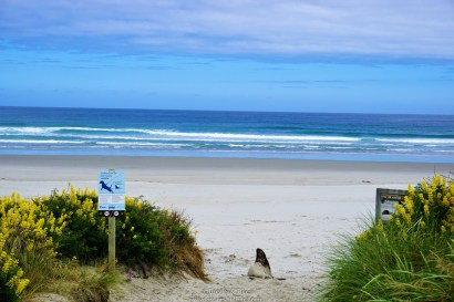 The beach and fur seal, amazing view