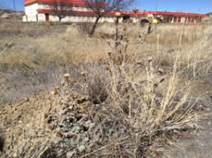 Example of heavy brush that covers the property