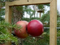 Fresh Fruit Bird Feeder