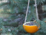 Orange Bird Feeder For Breast Cancer Healing Garden