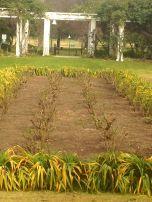 Center Arbor Area