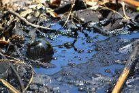Methane Bubble