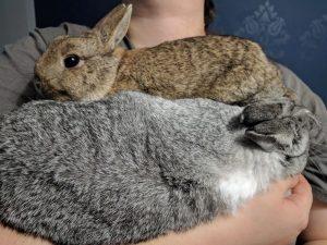 Bunnies, cuddlin'!