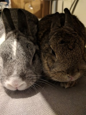 Photo of my bunnies sat together.