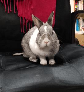 Hulk sat in an office chair looking stern