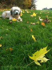 Edinburgh, October 2012 - Molly