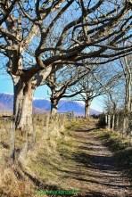 Plockton Brae in spring