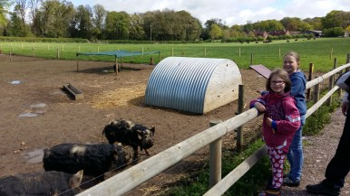 Kingston Lacey farm