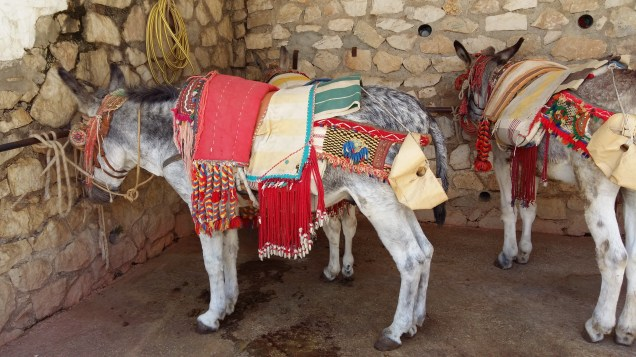 Even the donkeys are colourful