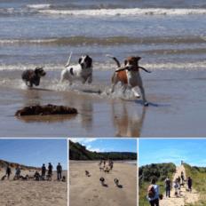 Amazing walks & dog friendly beaches