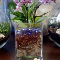 Как создать «сад в бутылке»: 6 практических шагов