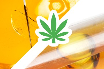 Concentrates vs distillates. Whats the best cannabis extract?