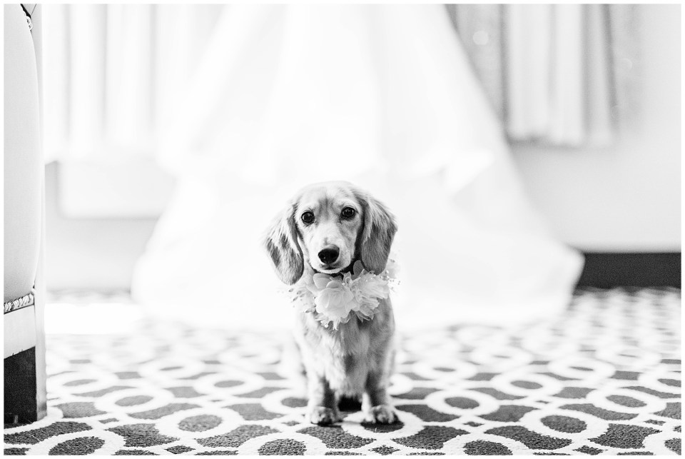 dog as the ring bearer at a wedding in palm springs, california
