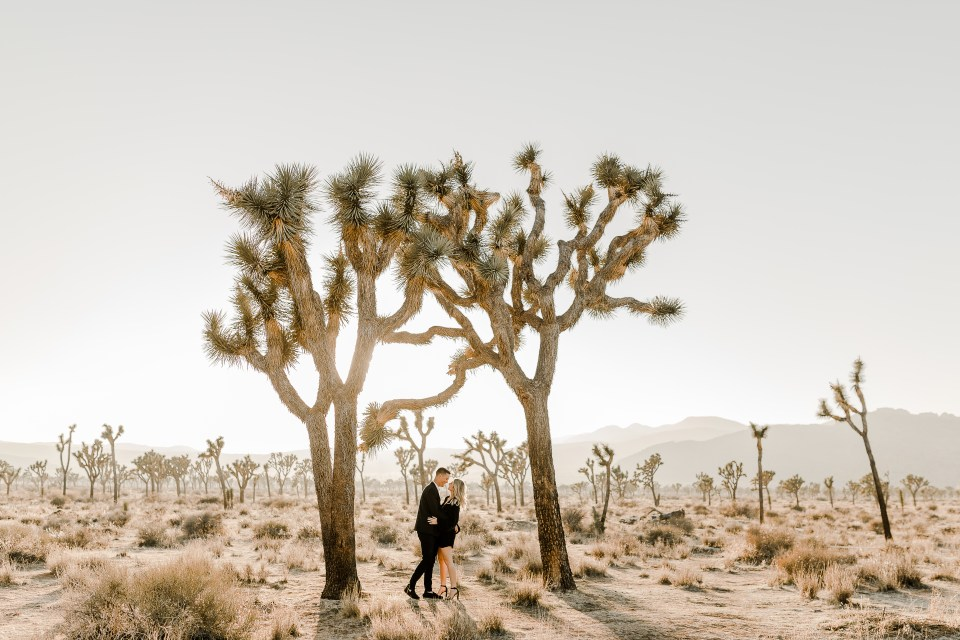 bride and groom wearing all black during sunset. taking gorgeous pictures next to a joshua tree during their Joshua Tree National Park Engagement Photos