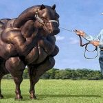 8 Biggest Horses And Horse Breeds In The World Horse Breeds