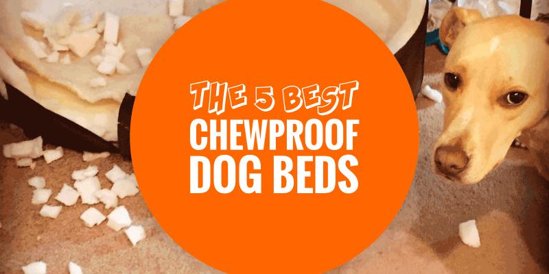 Top 5 Best Chewproof Dog Beds Aluminum Pvc Ballistic