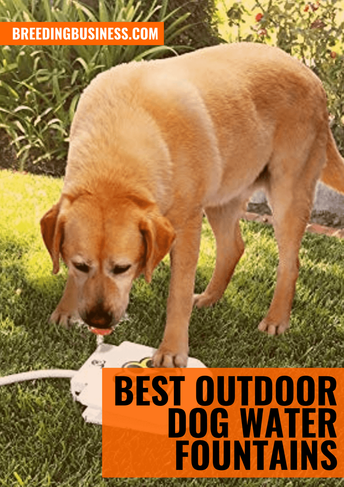 top 7 best outdoor dog water fountains