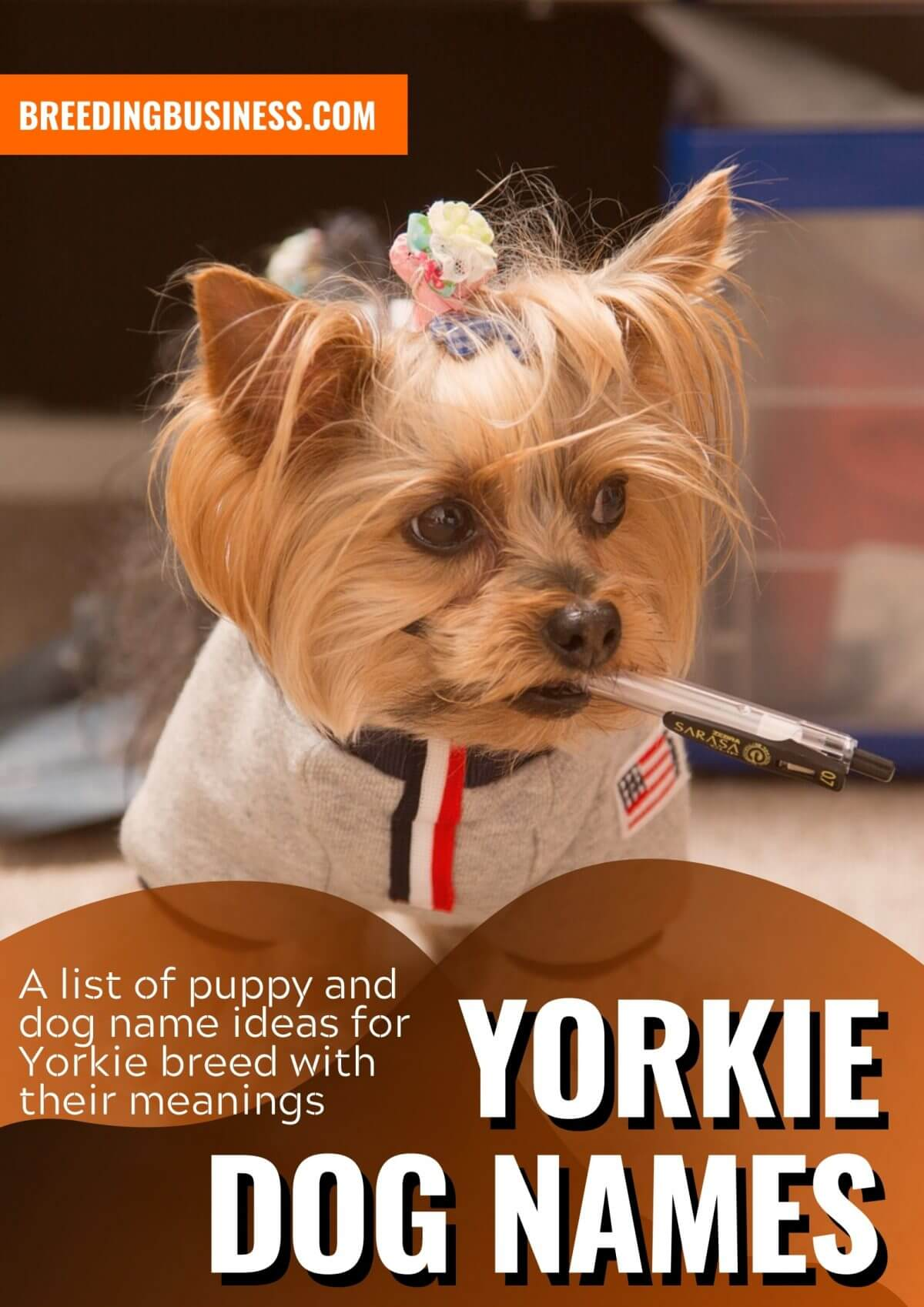 Yorkie Dog Names: 90+ Yorkshire Terrier Puppy Name Ideas!