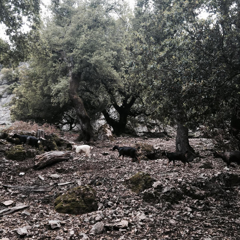 Mon voyage en Sardaigne entre copines 33