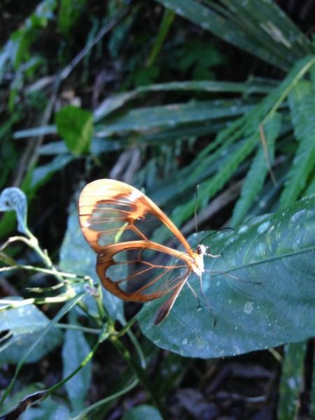 butterfly2 (Copy)