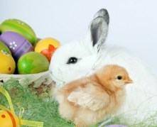 Easter bunny chick and egs
