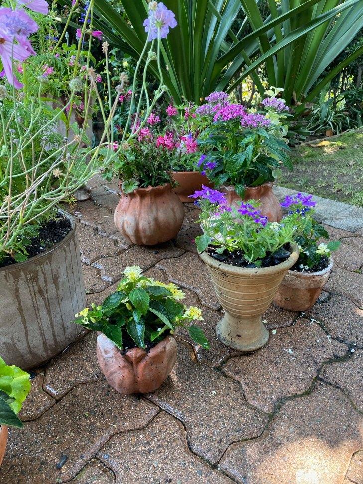 garden-curation-3