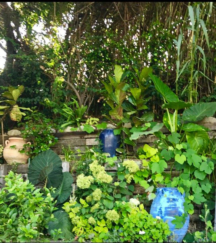 garden-curation-5
