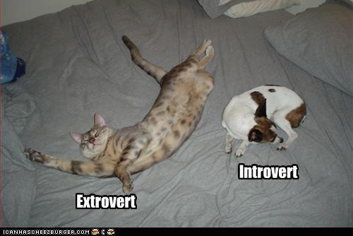 funny-pictures-cat-is-extrovert