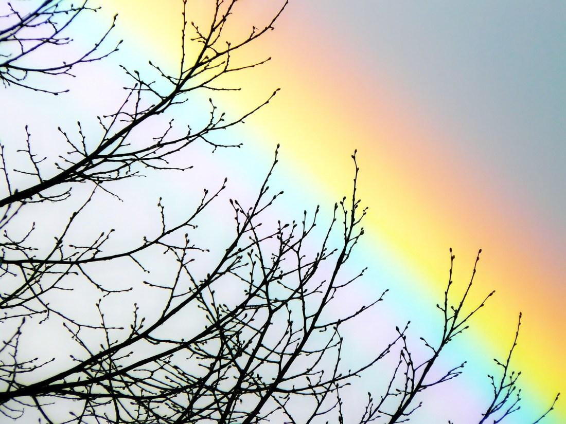 rainbow tree sky