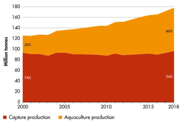 Global capture fisheries/aquaculture production, 2000-2018; from FAO's Statistical Yearbook 2020.