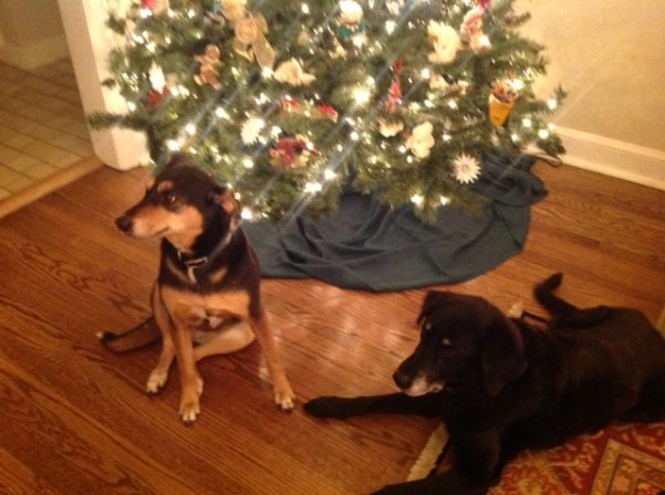 Stella and Scout were placed in Dec. 2012.