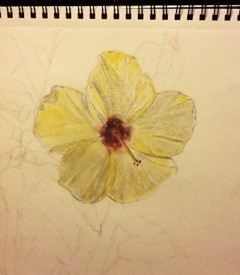 Hibiscus Flower on paper