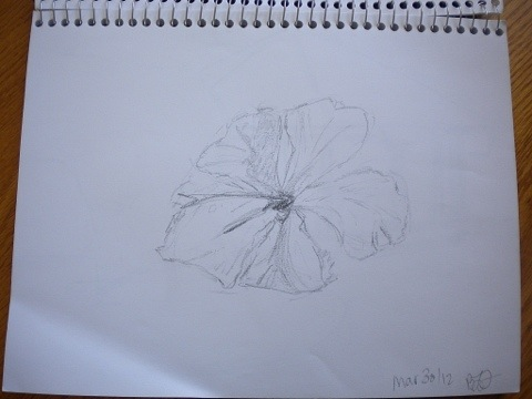 Hibiscus sketch on March 30, 2012