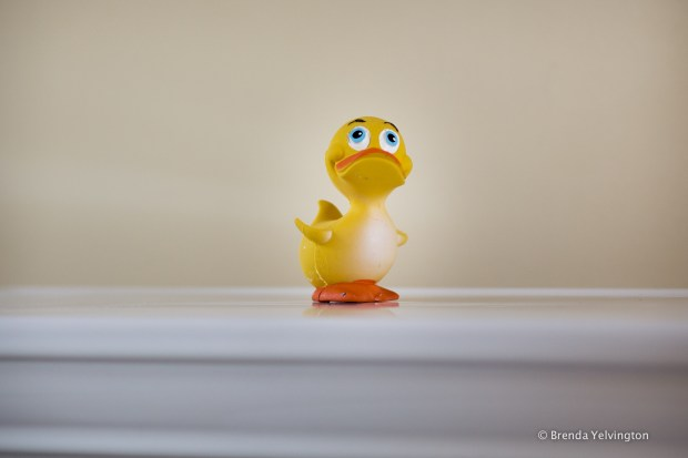 Photo of Rubber Ducky #2