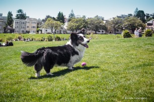 Mission Park dog 1