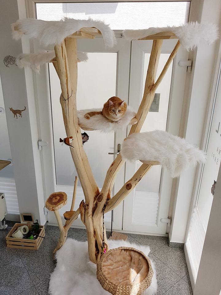 Royal Cat Hotel - sve za Njezinu Visost Mačku