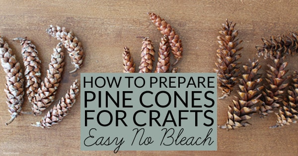 How To Prepare Pine Cones For Crafts Bren Did