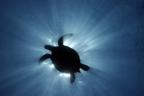 Photo: Australian Marine Conservation Society