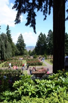 View of downtown Portland from Portland's International Rose Test Garden