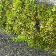 There's a good crop of moss this spring