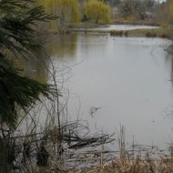 Greenspace beaver pond