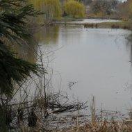 Greenspace beaver pond