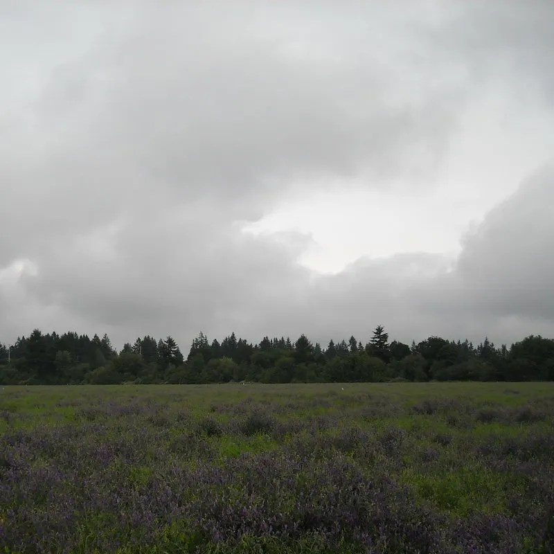 Field across from the Hillsboro airport