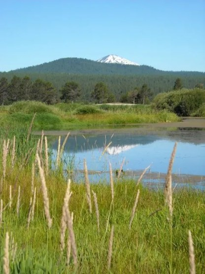 Mt. Bachelor reflected in a water hazard