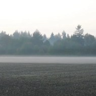 Fog on the field