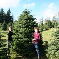 Heather and Jamison in search of the perfect tree