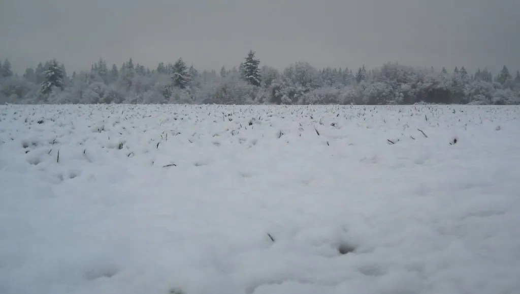 My Photo Spot With Spring Snow