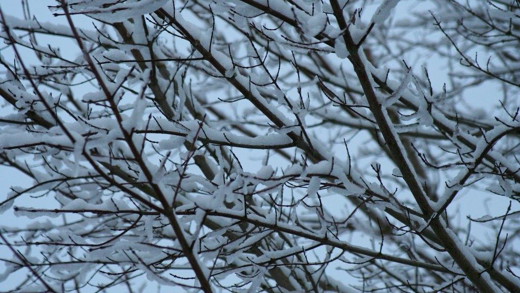 Spring Snow in Hillsboro